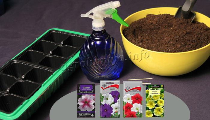 Подготовка к посадке семян петунии