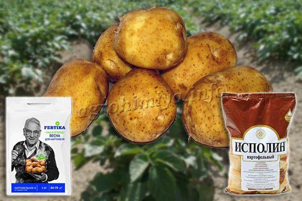 Чаще всего для картофеля рекомендуют «Исполин» и «Кемира»