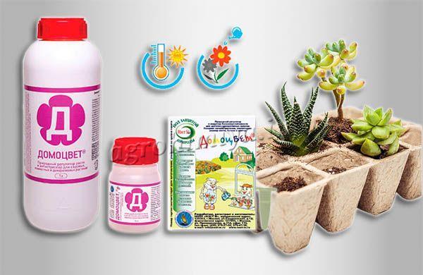 Домоцвет – это стимулятор роста и удобрение для комнатных растений