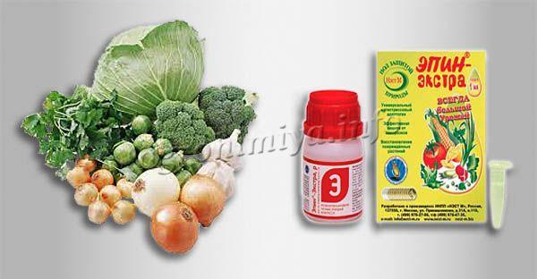 Инструкция по применению Эпин-экстра для капусты и лука