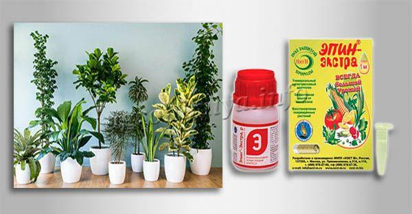 Инструкция по применению Эпин-экстра для комнатных растений