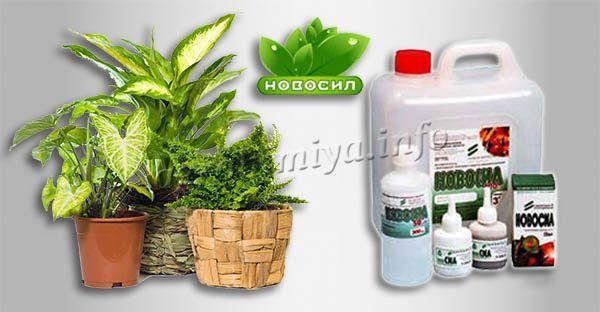 Инструкция по применению Новосила для комнатных растений
