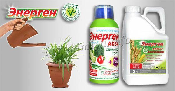 Инструкция по применению стимулятора роста Энерген для полива растений