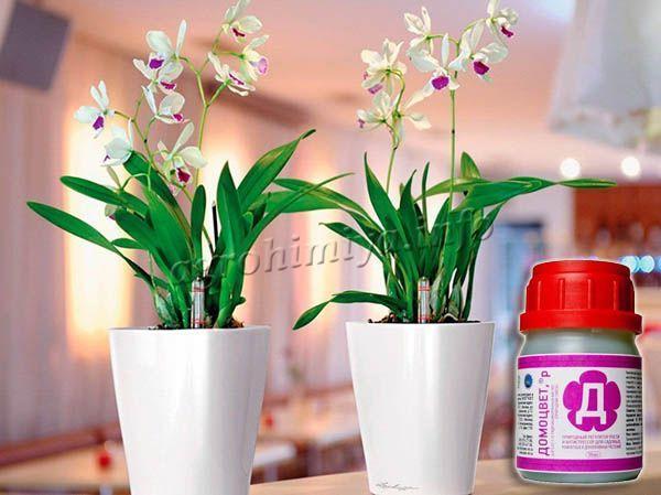 Стимулятор роста для комнатных растений Домоцвет пользуется у цветоводов большим спросом