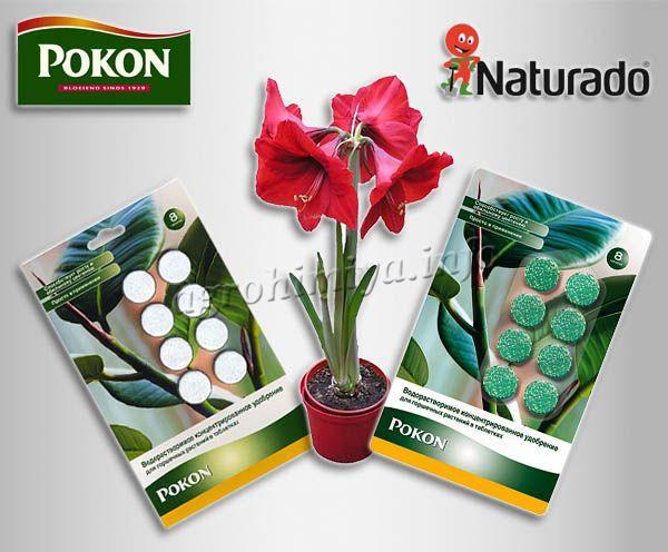 Водорастворимое концентрированное удобрение Pokon для горшечных растений в таблетках
