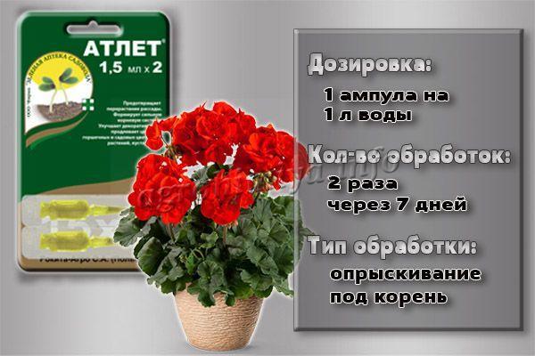 Инструкция по применению препарата Атлет для декоративных культур