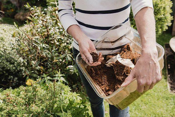Использование кофейной гущи для садовых цветов