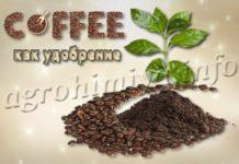 Кофе как удобрение