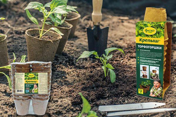 При использовании удобрения Крепыш для рассады, очень удобно использовать и торфогоршки этого же производителя