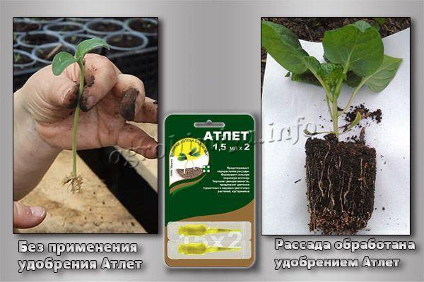 Удобрение Атлет имеет комплексный эффект
