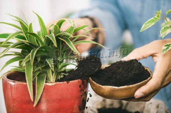 Удобрение из кофе для комнатных растений