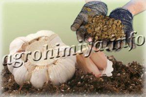 Чем подкормить чеснок после зимы