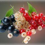 Чем подкормить смородину