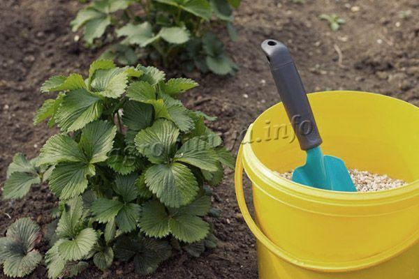 Чтобы использовать опилки как удобрение, необходимо чтобы они перепрели