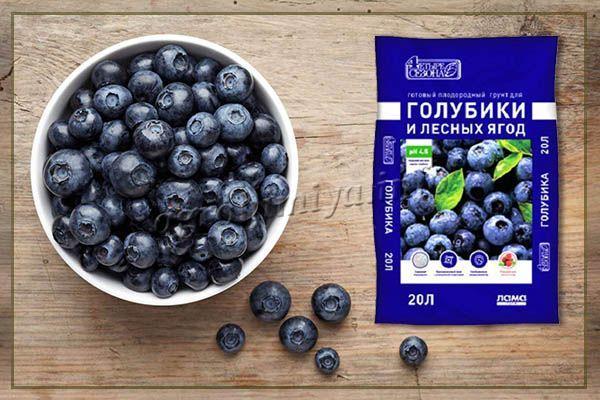Чтобы культура быстро принялась и пошла в рост, рекомендуется приобрести специальный грунт «Четыре сезона» для голубики и лесных ягод