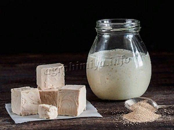Дрожжи – одноклеточные грибы, насыщенные аминокислотами, витаминами, белками