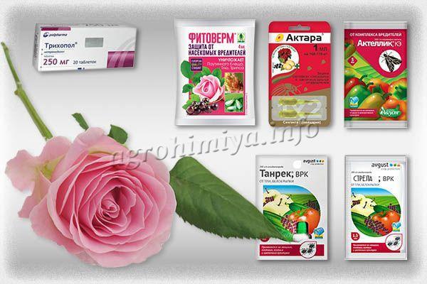 Эффективные инсектициды от тли на розе