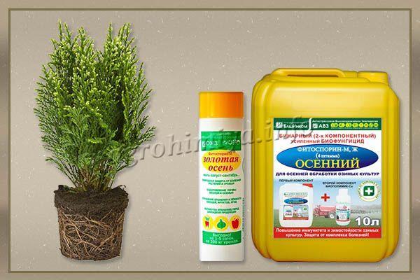 Фитоспорин – средство, разработанное на основе биогумуса, применяется как осеннее удобрение для туи