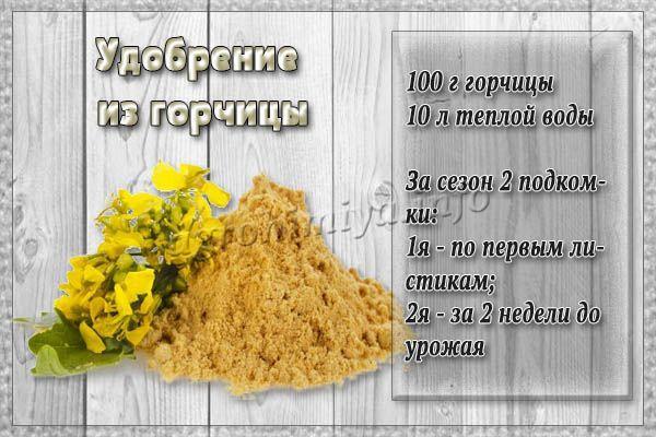 Горчица как удобрение применяется приверженцами органических подкормок