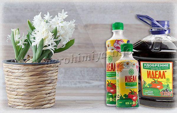 Использовать Идеал для цветов можно 3-4 раза в месяц