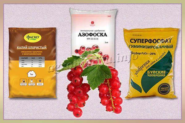 Минеральные удобрения для смородины