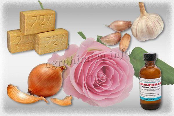 Народные средства от тли на розах