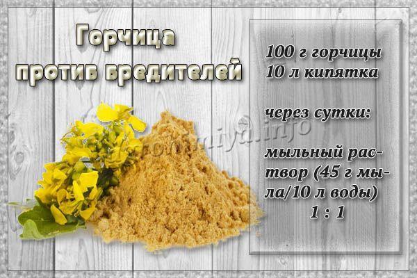 Очень часто используется горчица как сильное средство от вредителей на участке