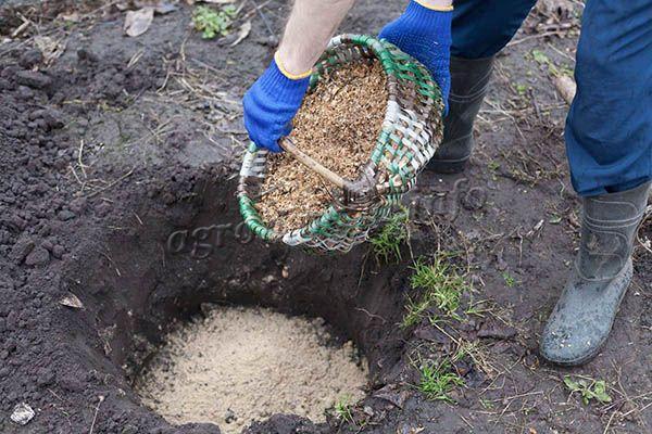 Опилки используют не только, чтобы разбавить землю, но и удобрить ее перед посадкой