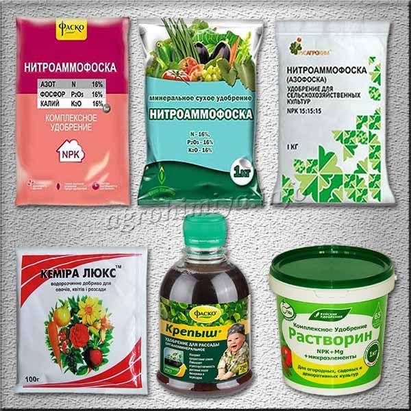 Препараты для подкормки томатов после высадки в теплицу