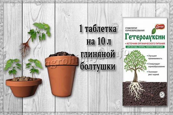 Применение Гетероауксина для кустарников и деревьев