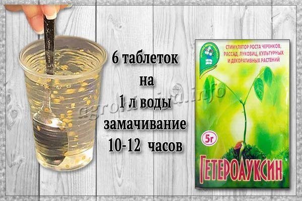 Применение Гетероауксина для замачивания семян