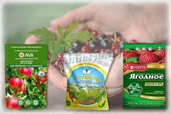 Специализированные удобрения для смородины