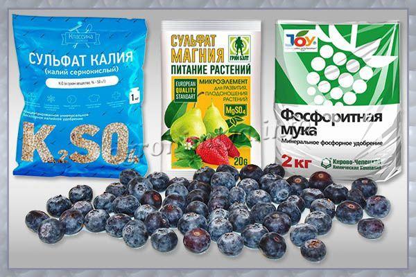 Удобрения летом рекомендуется вносить внекорневым методом, обрабатывая голубику по листу