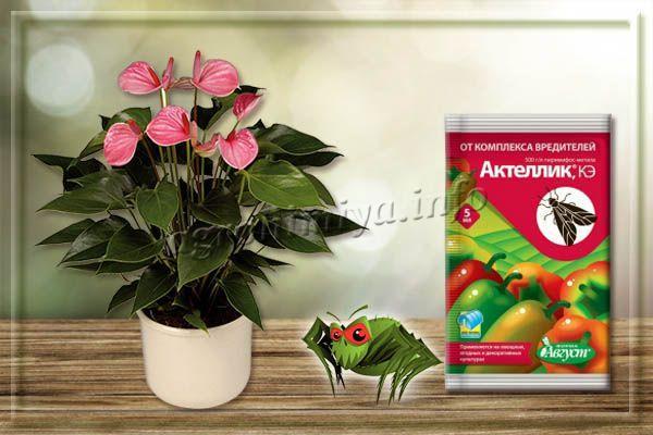 Актеллик – несистемный инсектоакарицид от паутинного клеща на комнатных растениях