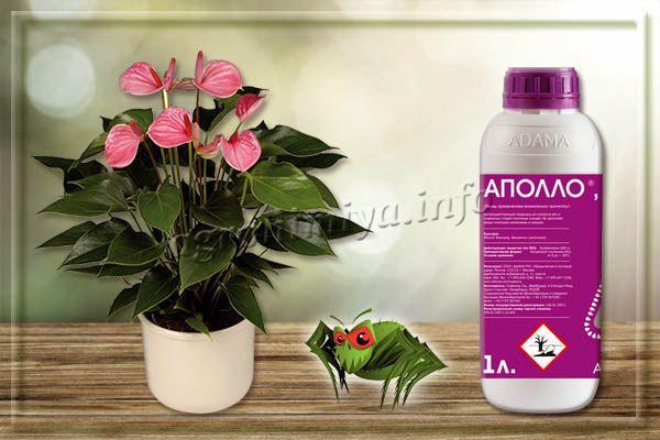 Аполло – гормональное средство от паутинного клеща на комнатных растениях