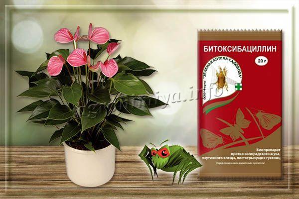 Битоксибациллин – биологический препарат от паутинного клеща на комнатных растениях