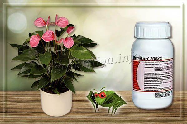 Демитан – слаботоксичный акарицид от паутинного клеща на комнатных растениях