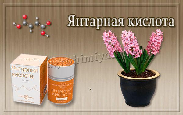 Для комнатных растений Янтарная кислота также полезна, как и для садовых, и огородных