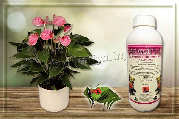 Флумайт – гормональный акарицид от паутинного клеща на комнатных растениях