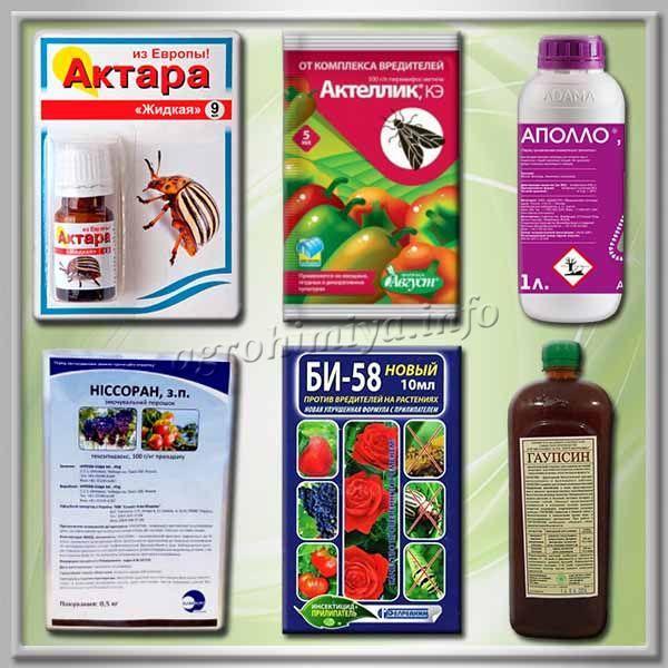 Фото лучших акарицидов и инсектицидов от вредителей на розах Кордана