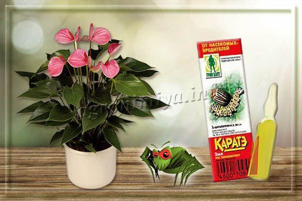 Каратэ – инсектоакарицид от паутинного клеща на комнатных растениях