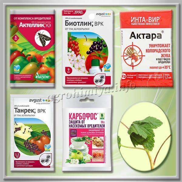 Лучшие препараты для обработки смородины от тли