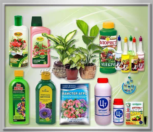 Минеральные подкормки для комнатных растений