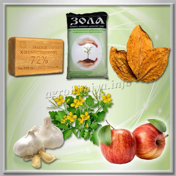 Народные средства от тли на яблоне
