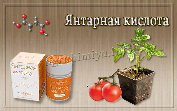 Янтарная кислота популярна для улучшения роста капустной и томатной рассады