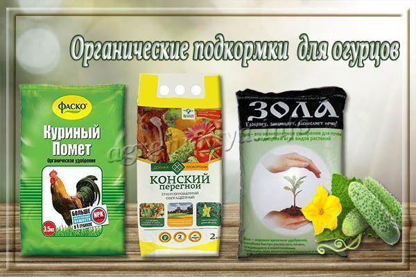 Органические подкормки для огурцов