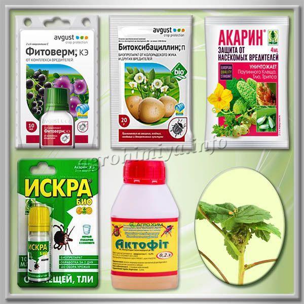Самые популярные биологические препараты от тли