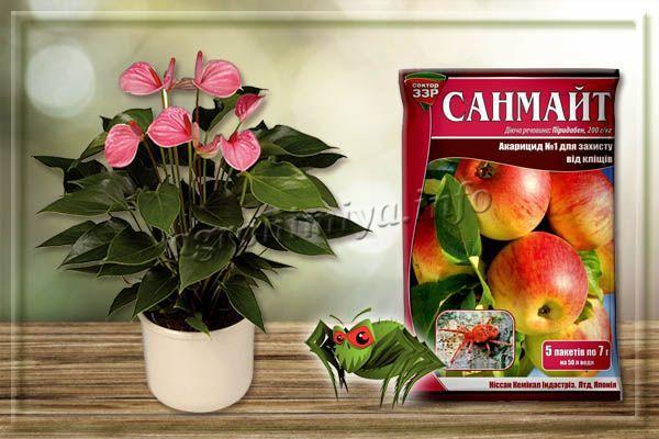 Санмайт – контактный акарицид от паутинного клеща на комнатных растениях