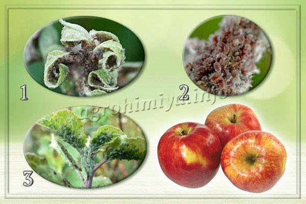 Виды тли на яблоне (1 - серая тля; 2 - красногалловая тля; 3 - зеленая тля)