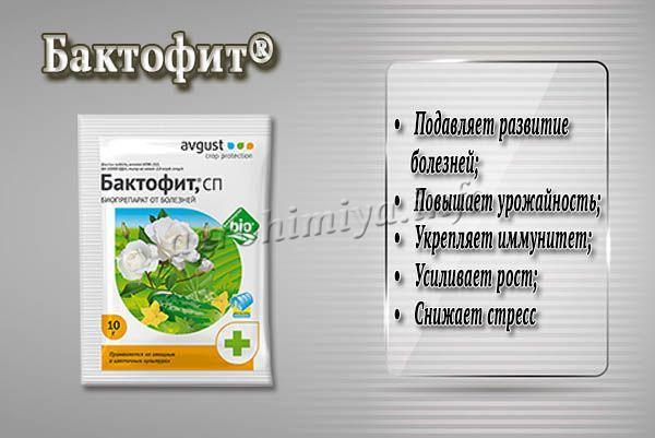 Биофунгицид Бактофит оказывает многогранное действие на растения